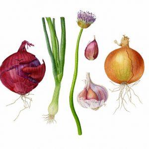 Allium & Spice