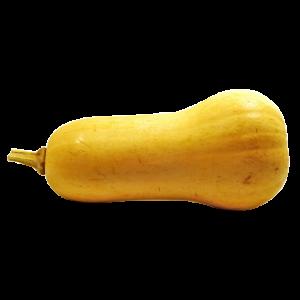 Squash Butternut